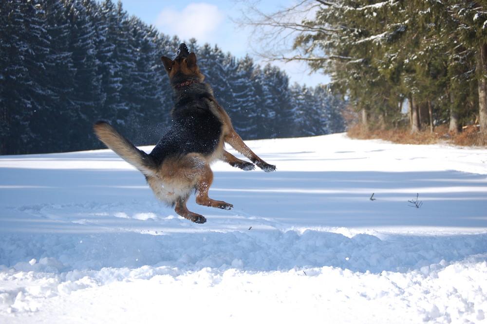 Jump im Schnee