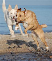 Jumping Phoebe