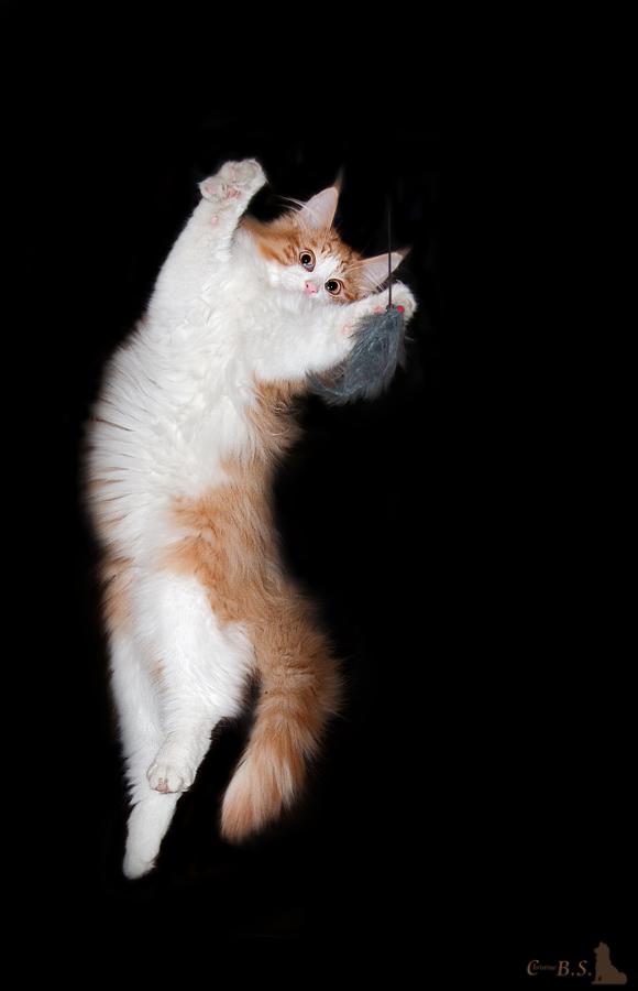 Jumping Puschel
