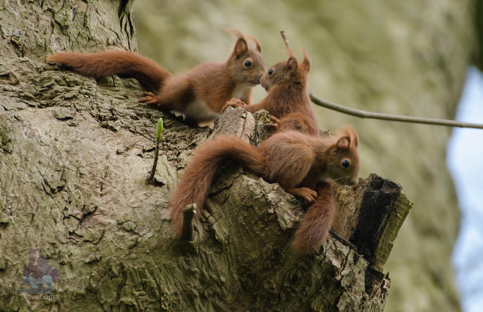 junge eichhörnchen foto & bild   tiere, wildlife, nikon