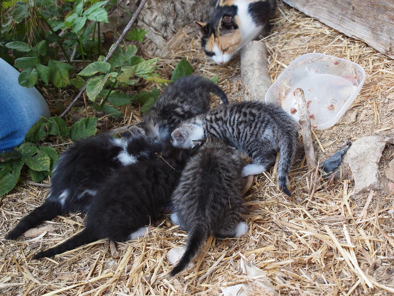 junge Kätzchen, zu verschenken Foto & Bild | tiere
