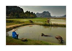 Junge Landarbeiterin hütet Wasserbüffel