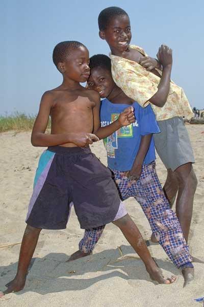 Junge Machos am Malawisee