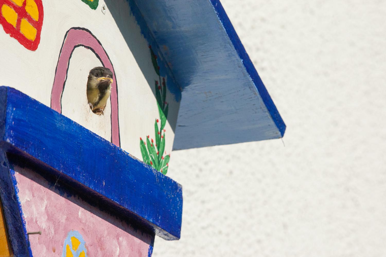 Junge Meise schaut mal aus dem Vogelhaus