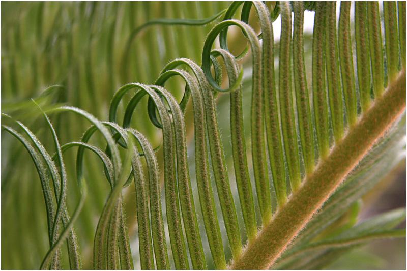 Junge Palme (2)
