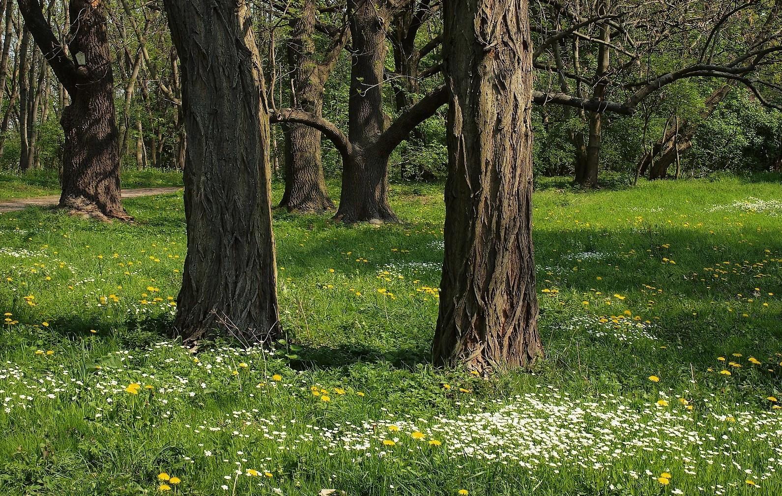 Junger Frühling im alten Park