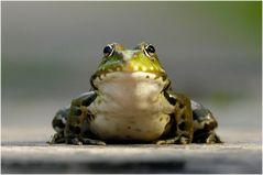 Junger hübscher Frosch sucht Prinzessin!