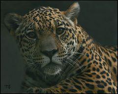 junger jaguar