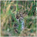 Junger Leopard