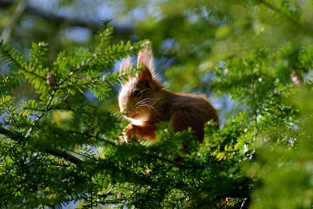 Junges Eichhörnchen will ganz hoch hinaus...
