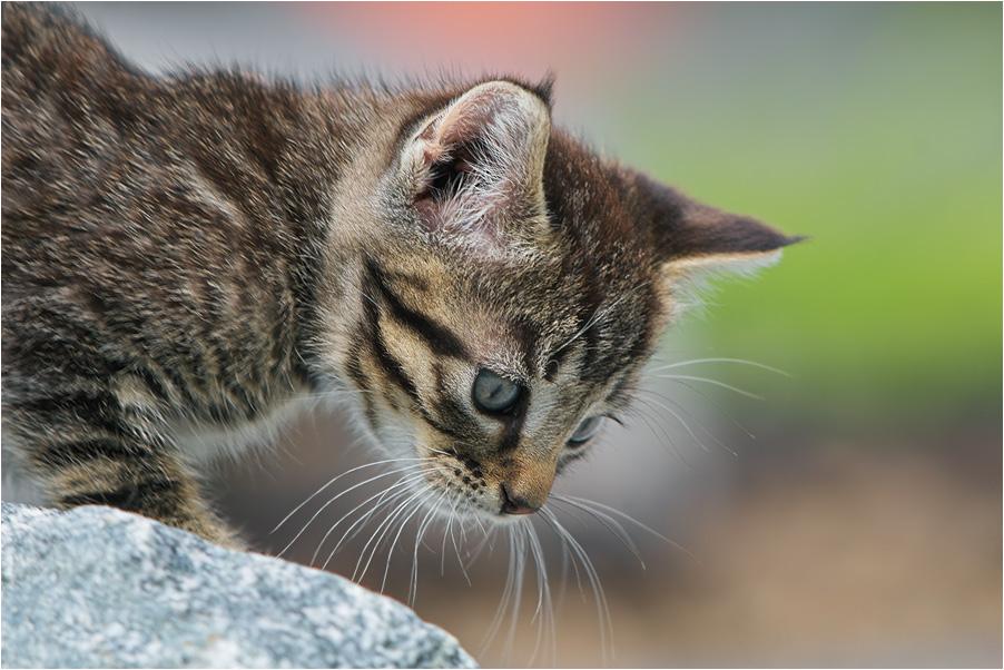 Junges Kätzchen
