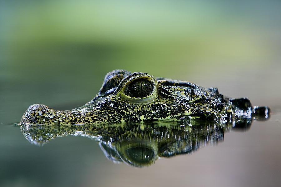 Reptilium Landau Bilder