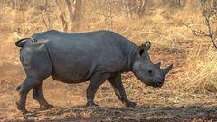 Simbabwe - Sambia