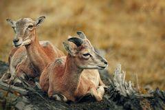 junges Wildpaar