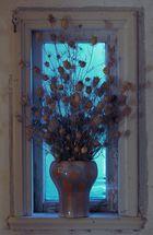 Jungfer in Grün ganz Trocken im Fenster