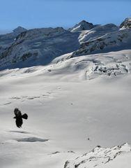 Jungfraujoch ..