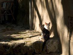 Jungkatzen in der Toskana