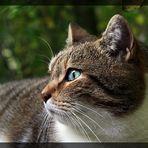 jungle cat joey
