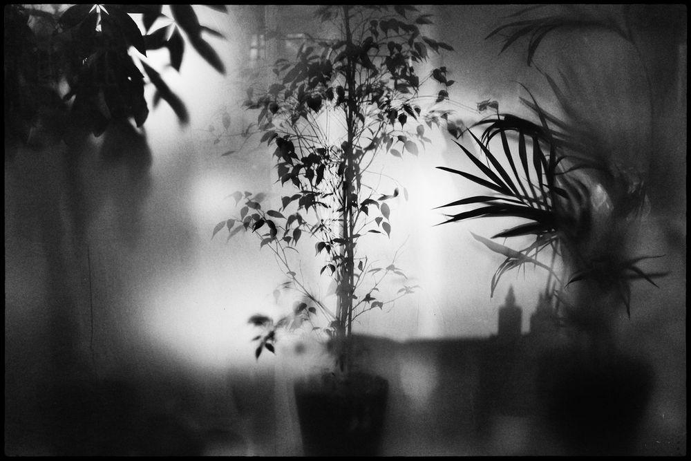 Jungle in a window