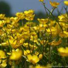 Jungle jaune