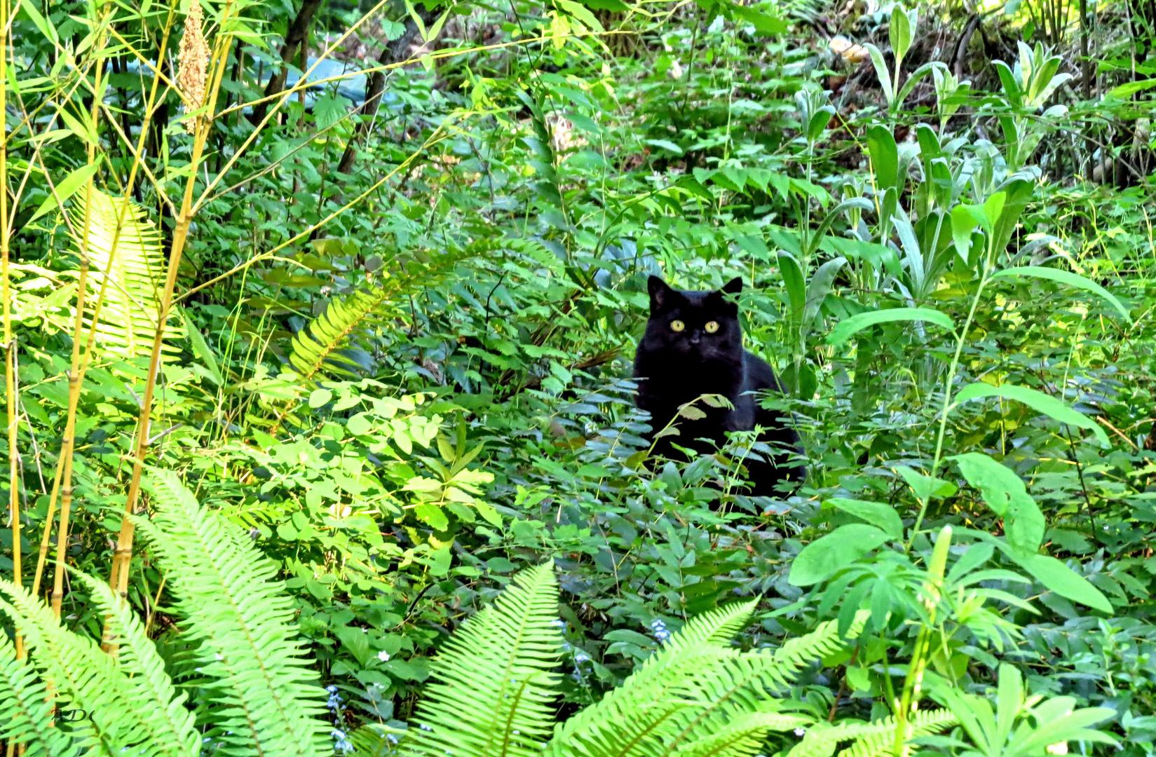 Jungle-Kitty