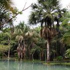 Jungle near Amazonas 0329