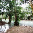 Jungle near Amazonas 0357