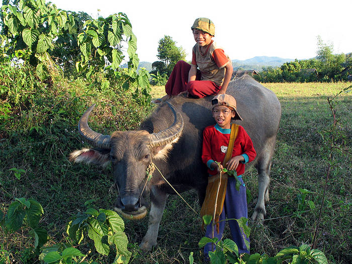 Jungs mit Büffel