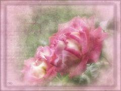 Juni in rosa...