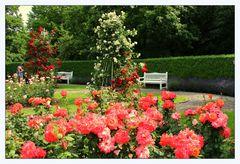 Juni - Rosenzeit (2)