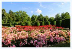 Juni - Rosenzeit