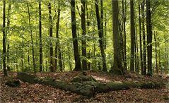 Juni Waldtage