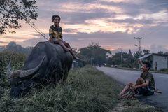 Junior Sumbanesen samt Parang und Methan-Taxi ~ Sumba Barat