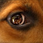 """""""Jupiter's Auge""""......(keine Montage!)"""