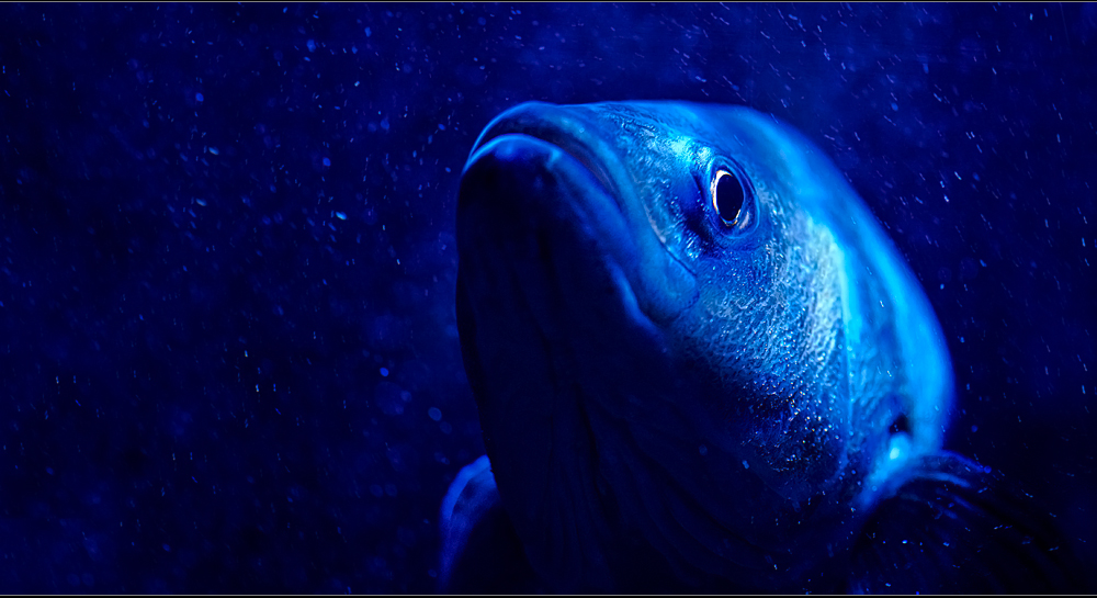 just a fish in the deep blue