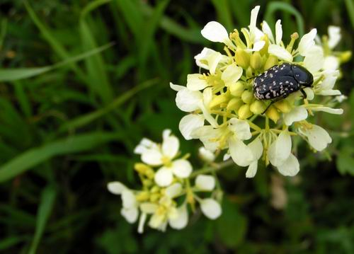 just a flower and a bug