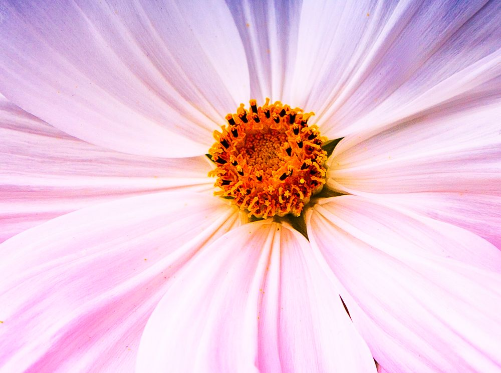 just a flower up close