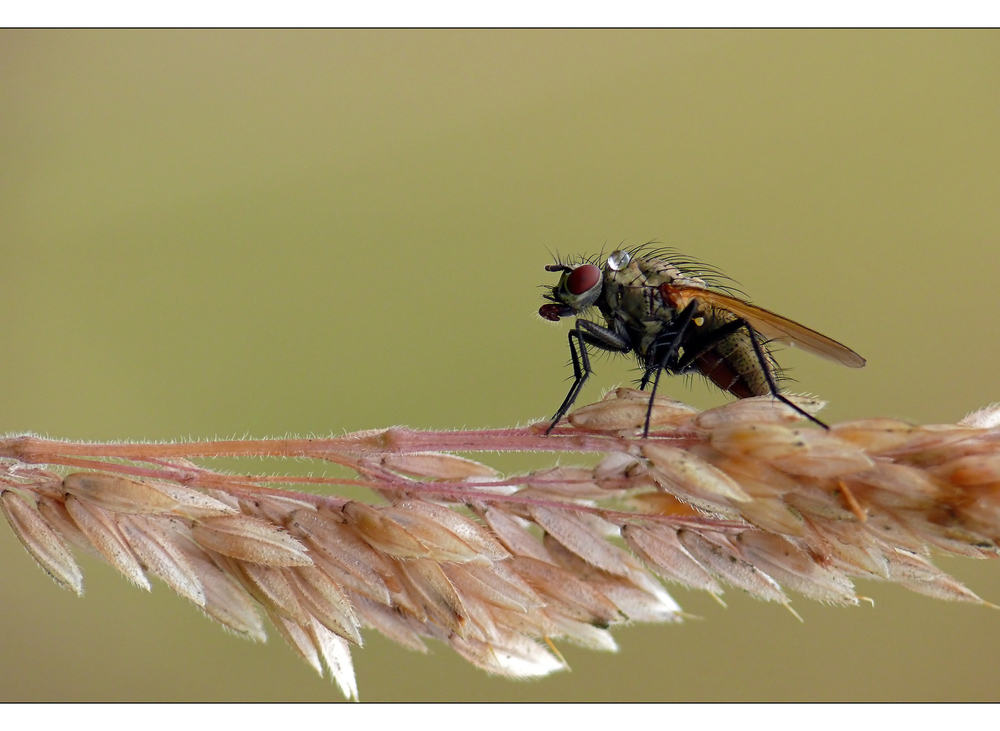 ~just a fly~