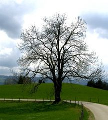 Just another tree