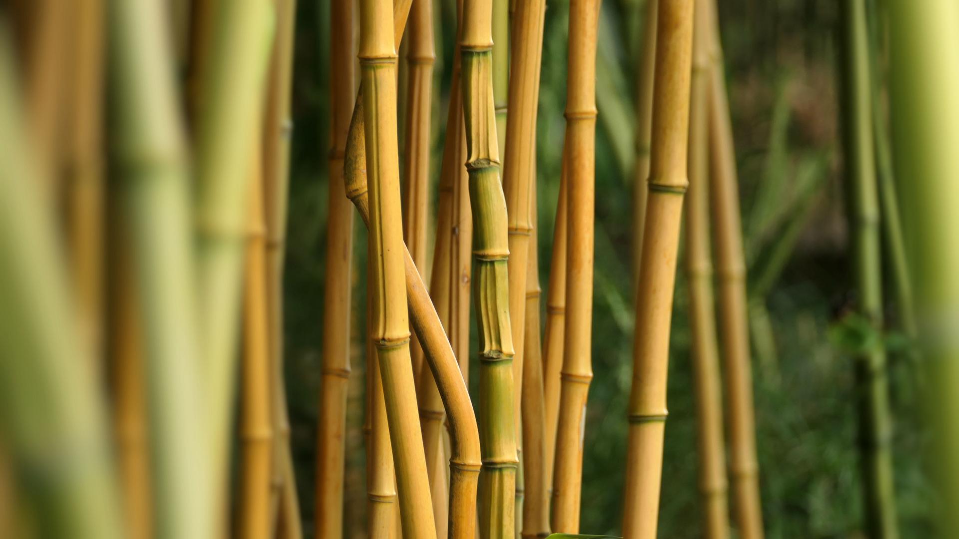 ... just bamboo