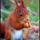 Just Lickin My Nuts