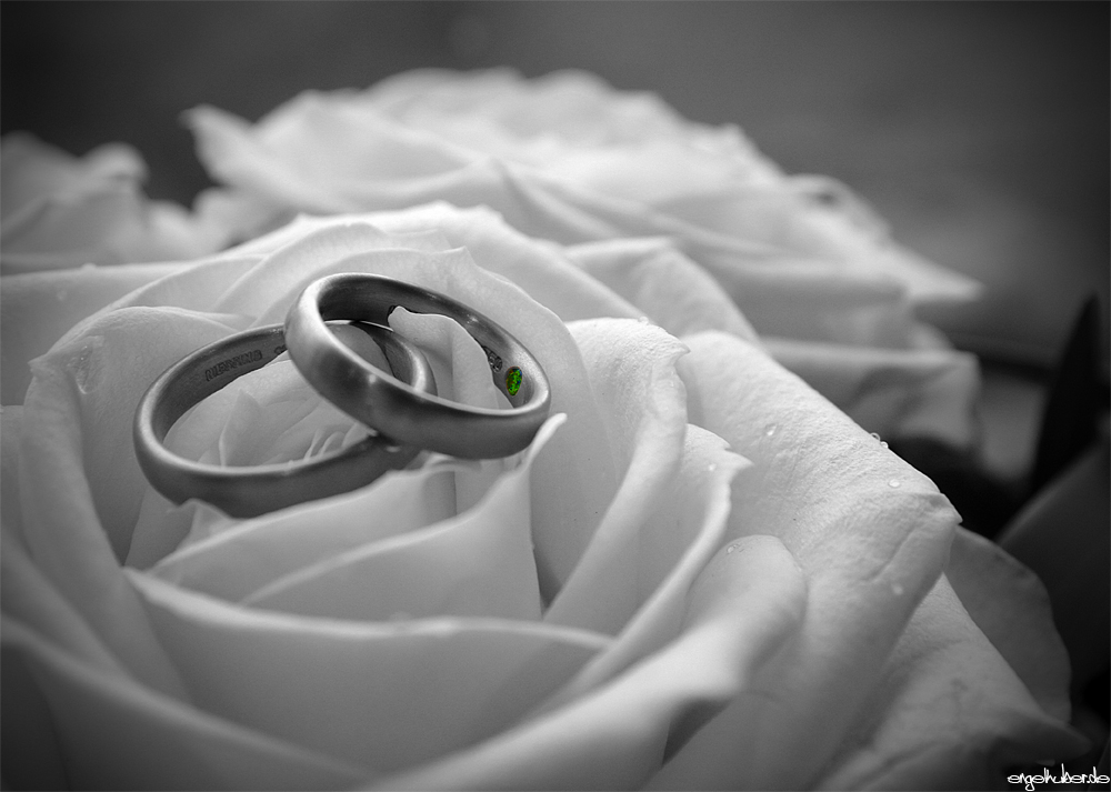 Just Married Ringe Foto Bild Hochzeit Collagen Rosen Bilder