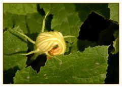 Just Veg - Nur Gemüse
