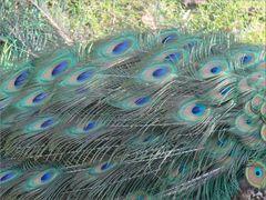 ..Juste les plumes..