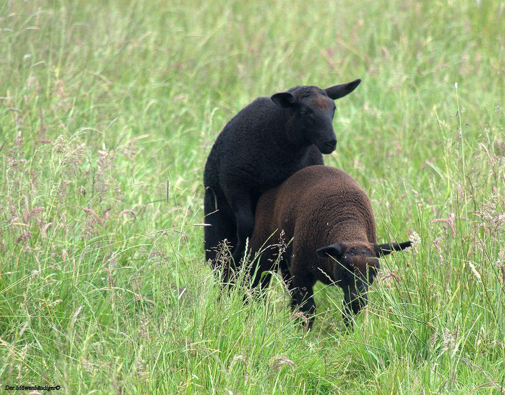 Justus-Tobias war das schwarze Schaf der Herde , vor ihm war keiner sicher