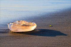 Juwelen des Meeres