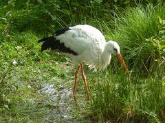 Jyllands Park Zoo (1)
