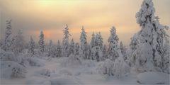 Jyppyrä im Winter