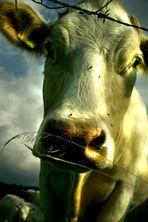 K f W -> Kuh für Wertvernichtung