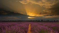K3_2062_Sonnenaufgang über dem Lavendelfeld
